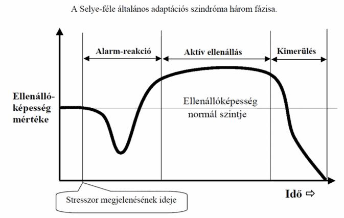 A stressz és a teljesítmény (2.rész)